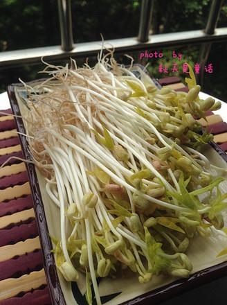 自發綠豆芽的做法