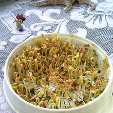 綠豆芽養成記