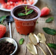盆栽酸奶的做法