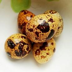 煮五香鹌鹑蛋