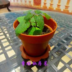 花盆式木糠杯