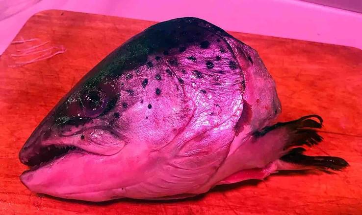 三文鱼头炖豆腐的做法大全