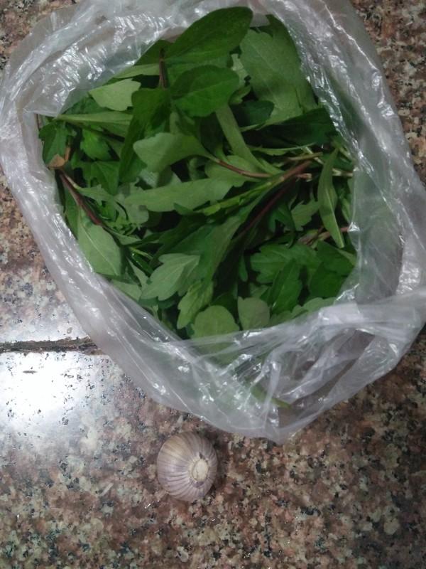 野菜--马兰头的做法大全
