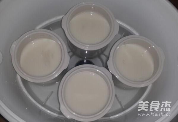 牛奶炖燕窝的做法大全
