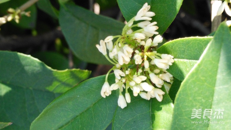 桂花枸杞茶的做法大全