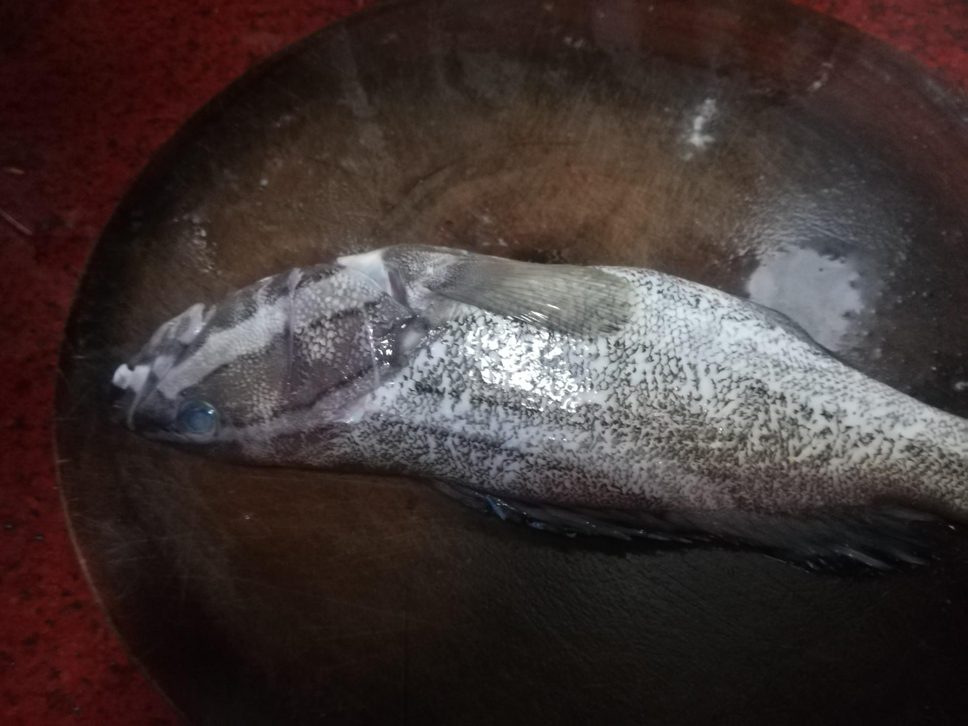 清蒸油斑鱼的做法大全