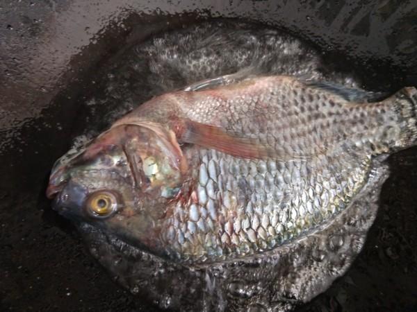 红烧罗非鱼的做法图解