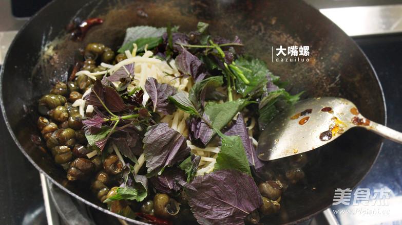紫苏炒石螺丨大嘴螺怎么炖