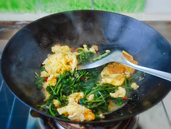 枸杞芽炒鸡蛋怎么吃