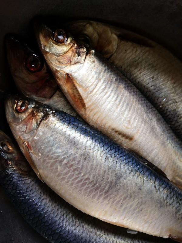 香煎青鱼的做法大全