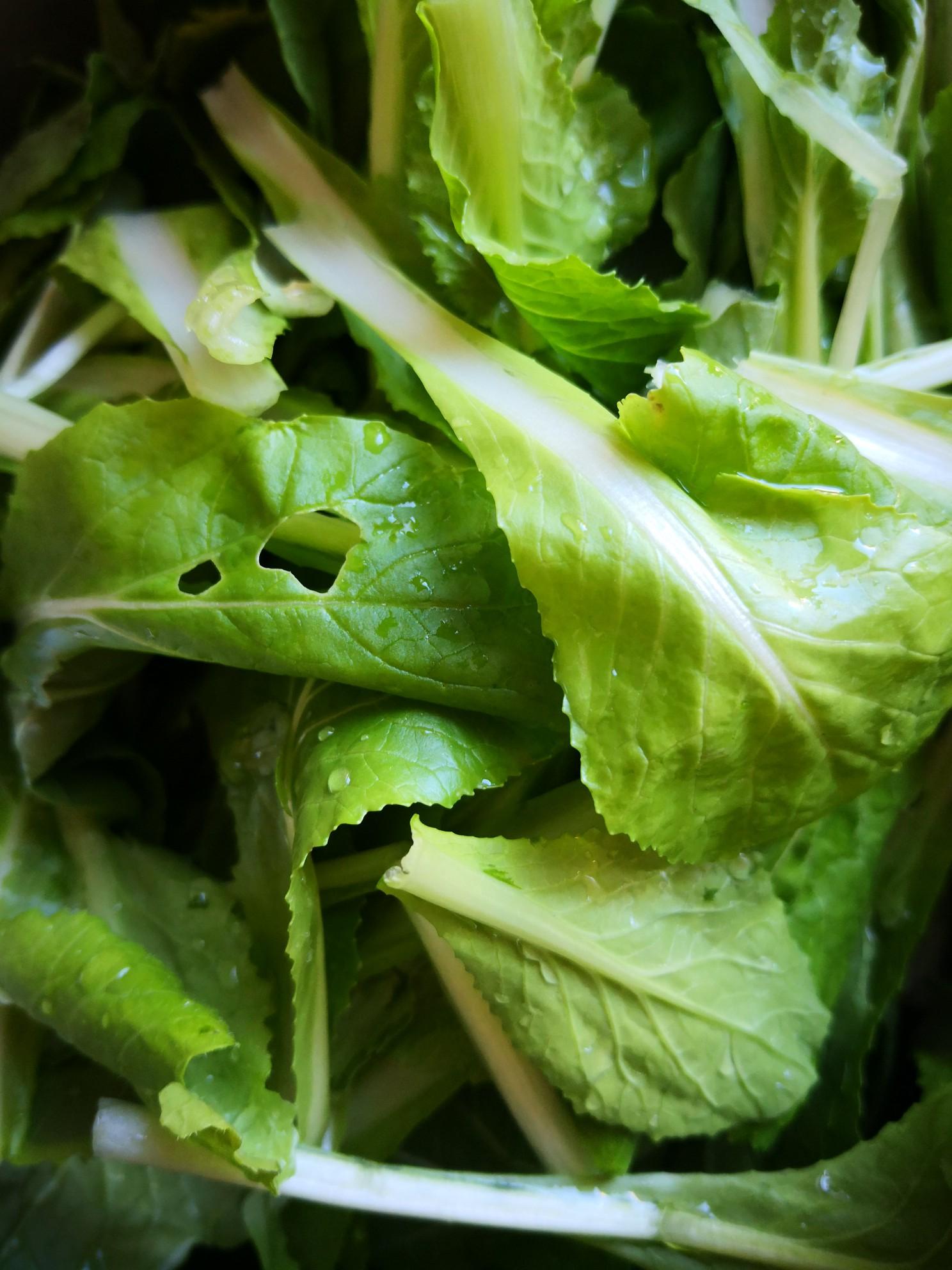 小白菜炖豆腐的做法大全