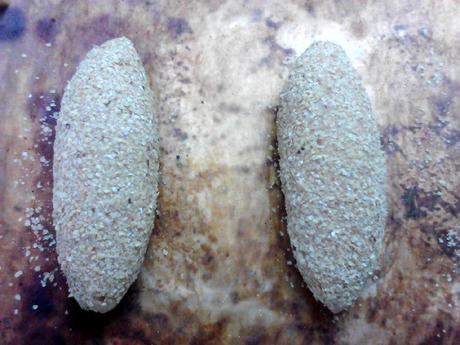 全麦红糖小麦胚芽面包怎样做