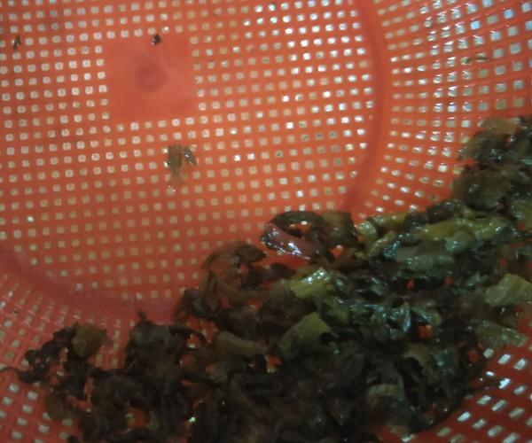 雪菜炒黄豆芽的做法图解