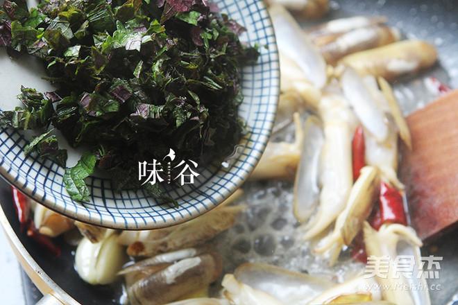 紫苏炒蛏子怎么吃