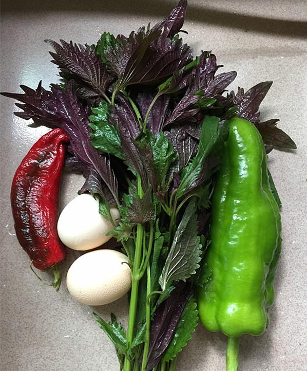 紫苏煎鸡蛋的做法大全