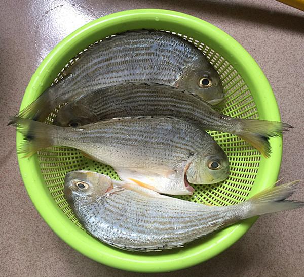 酱烧海立鱼的做法图解