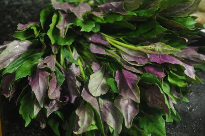 清炒紫背天葵的做法大全