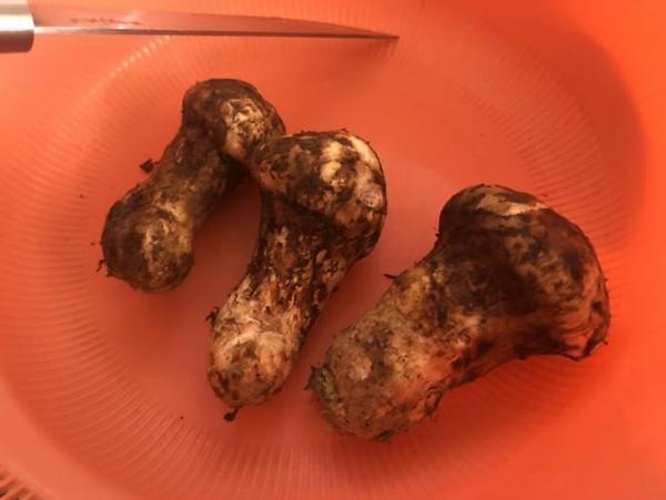 松茸烩饭的做法大全