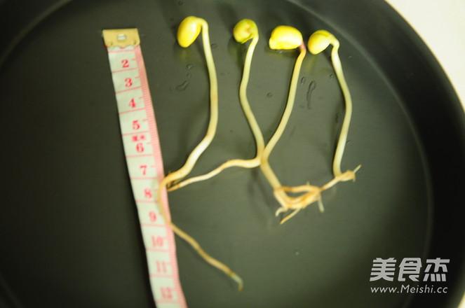 自发黄豆芽的步骤