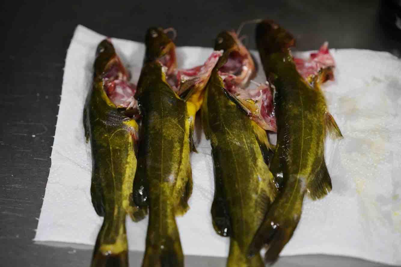 鸡尾青瓜仔炖黄骨鱼的做法图解